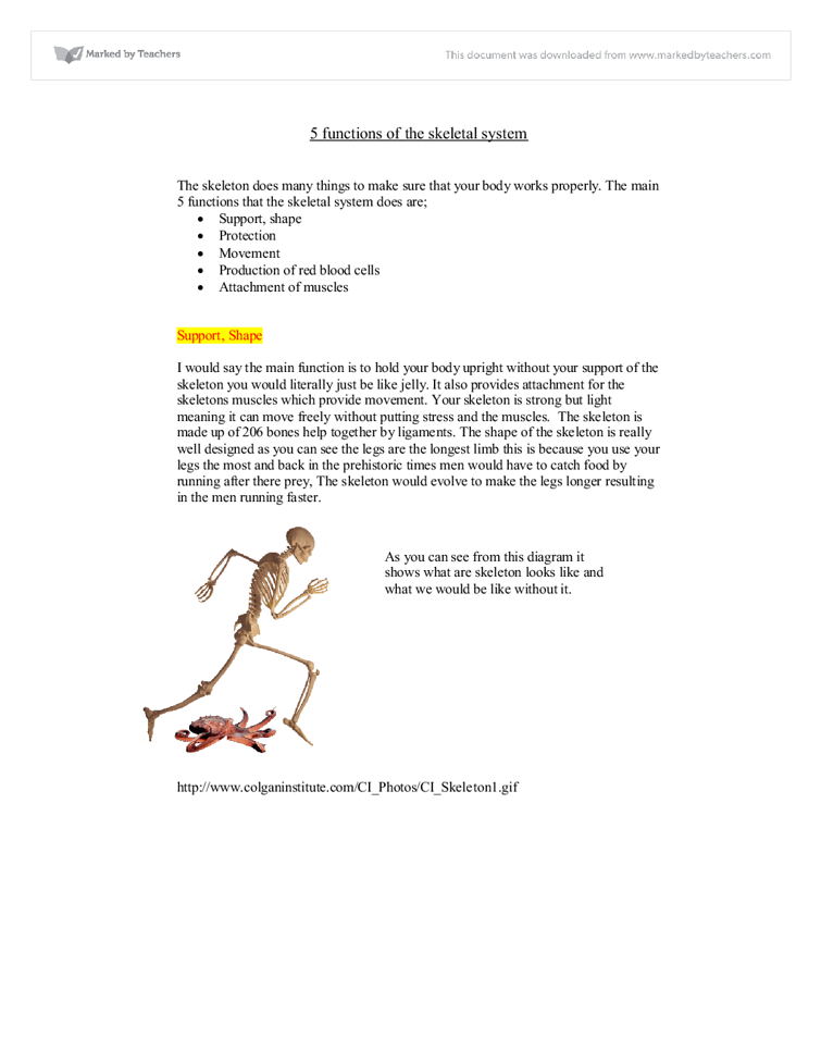 functions of the skeleton - A-Level Physical Education (Sport ...