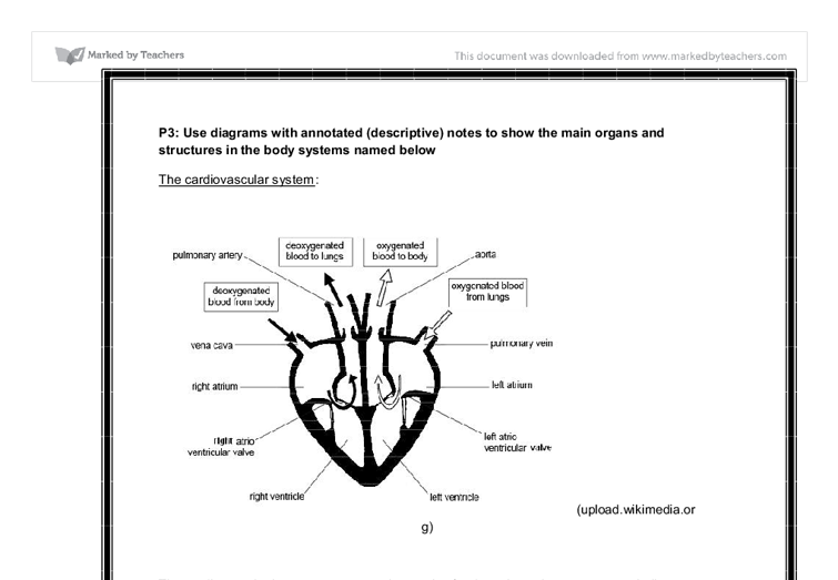 physiology of two named body systems essay Nervous system: there are 3 main functions for the nervous system  we will  write a custom essay sample on any topic specifically for you for only $1390/ page  spinal cord: the spinal cord has also got two parts to it, known as  of  the physiological effect of 3 recreational drugs on the human body.