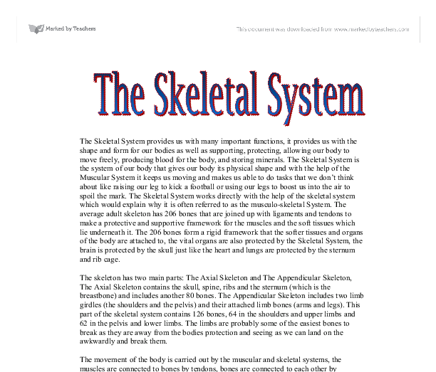 the skeletal system a level physical education sport coaching  document image preview