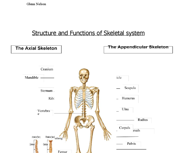 functions of the skeleton essay Function of the skeletal system 1 support 2 movement: the bones of the upper and lower limbs pull and push, with the help of muscles 3 storage as a mineral store 97% of the body's calcium is stored in bone.