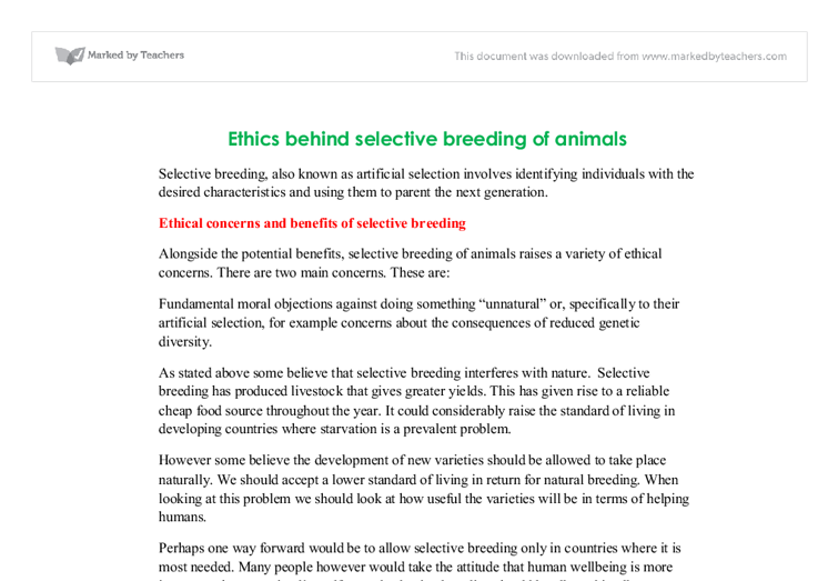 selective breeding essay What is selective breeding selective breeding involves choosing parents with particular characteristics to breed together and produce offspring with more desirable.