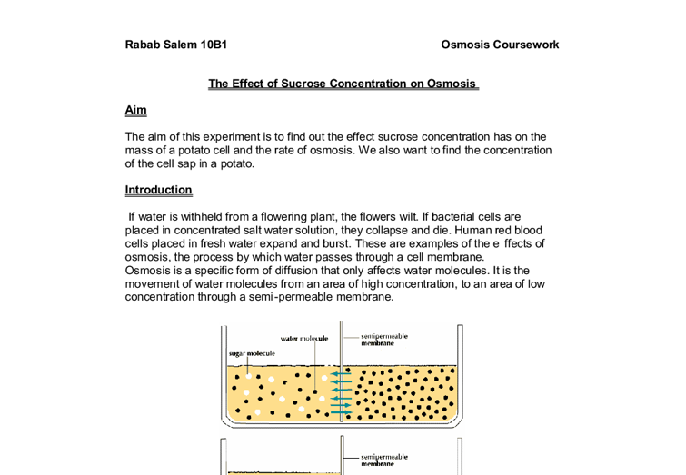Osmosis: Various Sucrose Concentrations Essay Sample