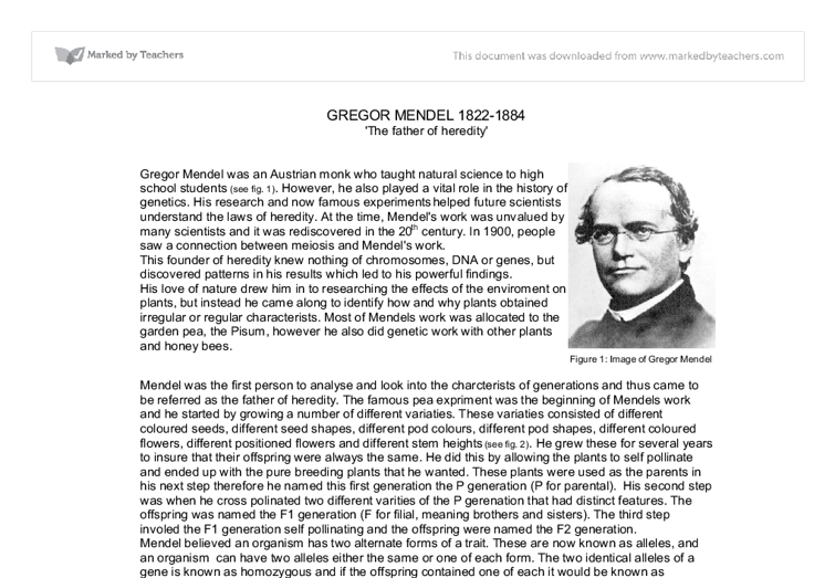 gregor mendel research paper - gregor johann mendel gregor mendel was one of the first people in the history of science to discover genetics he independently discovered his work and lived in brunn, czechoslovakia in.