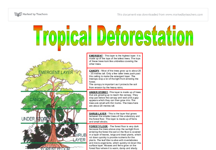 Short essay on deforestation and afforestation