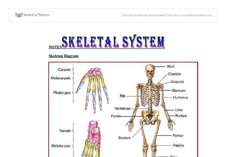 anatomy and physiology 2 essay Need homework and test-taking help in anatomy and physiology these articles can help you understand the anatomy and physiology of the human body.