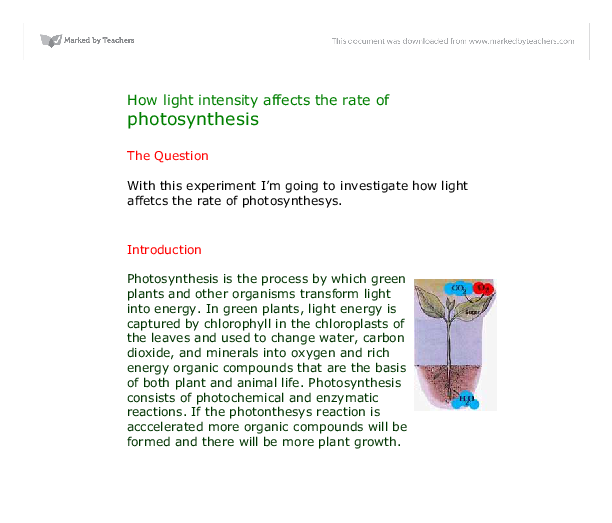 biology how light intensity affects 19052018  this activity is a lab where students design an experiment to test the rate of photosynthesis  of light intensity,  variable affects the.
