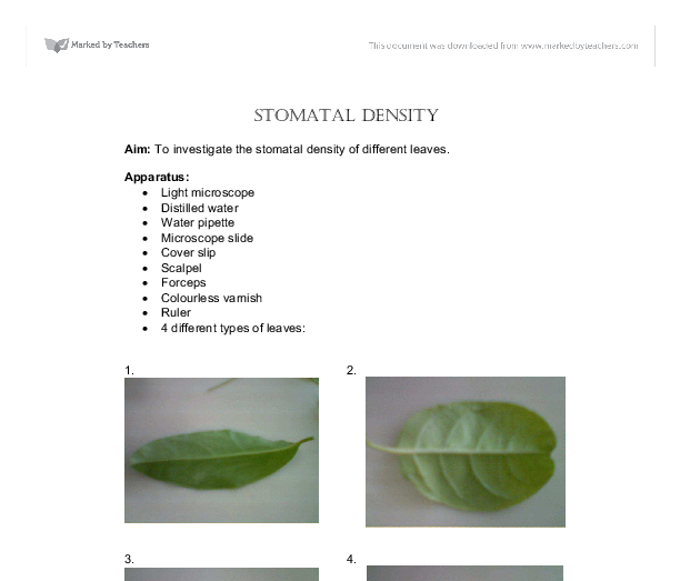 stomata distribution in a dicot leaf essay Summary stomata play a pivotal role in the regulation of gas exchange in flowering plants and are distributed throughout the aerial epidermis in leaves, the pattern stomatal initial forms closest to the leaf tip in some monocot species, this stomatal initial, the guard mother cell (gmc), undergoes a symmetrical division to.
