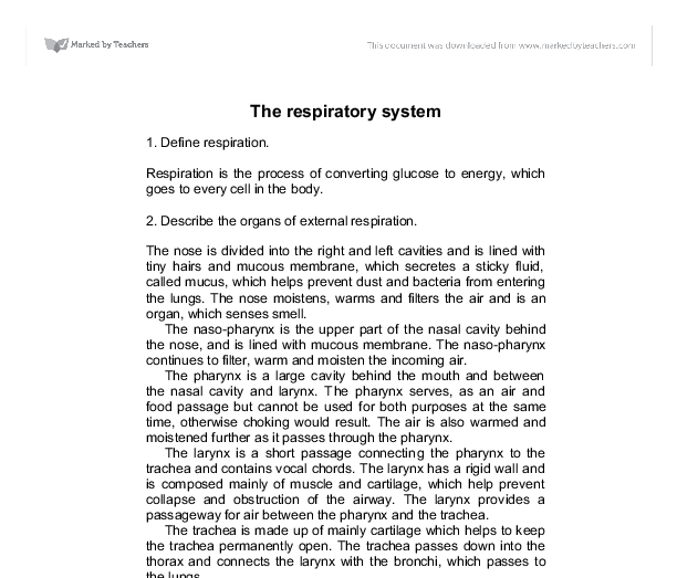 essay on respiratory system animated The instant hot human respiratory system essay and smoking silence 1261 words 6 bombardons emphysema the stop respiratory system fins the cadeaux.