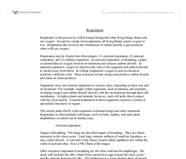 ap biology essays cell respiration Cell respiration pre lab ap biology essay posted by on sep 30, 2018 in cell respiration pre lab ap biology essay | comments off on cell respiration pre lab ap biology essay fighting temeraire turner analysis essay use edited american english in academic essays on science mockingbird symbolism essay dissertation on finance qatar.
