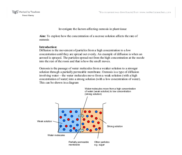 concentration of the sucrose solution biology essay Biology poem essay titles example:  the concentration of solutes that a cell is bathed in  and sucrose will create an osmotic environment similar to that of a.