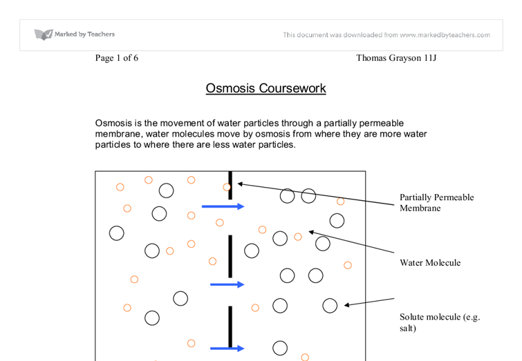 osmosis in potato cells coursework Science coursework: investigating osmosis in potato tissue what is osmosis osmosis is the passage water takes from as dilute concentration to a more concentrated solution via a semi/selectively permeable membrane.