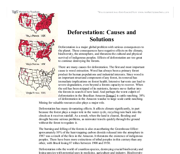 Essay on deforestation