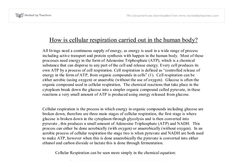 ap biology cell respiration essay question Ap biology syllabus - unit 3: cellular respiration essential questions: 1 how does energy get converted from one form to another 2 how is the energy stored in food obtained and used by.